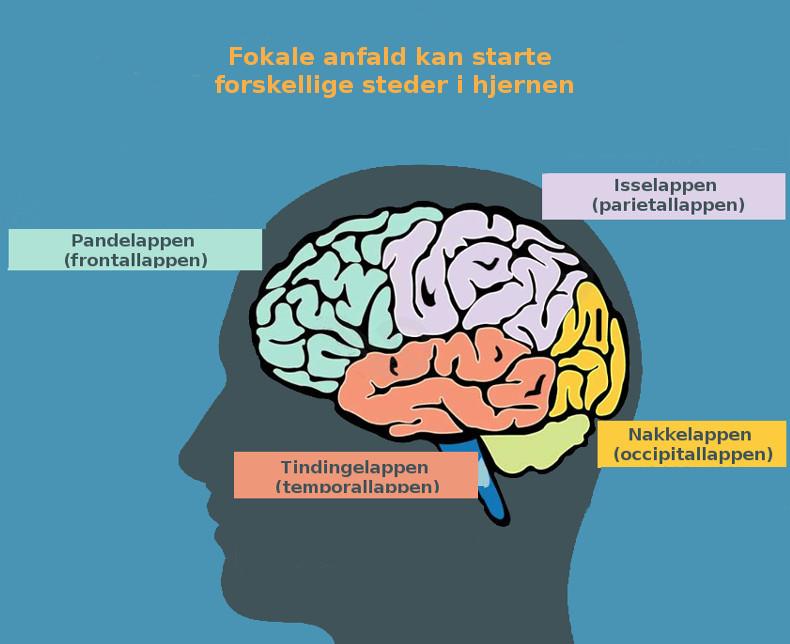 Hjernens områder